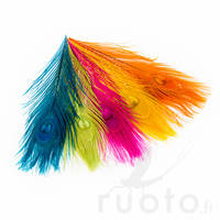 Peacock Eye Feathers -  - 40450300001 - 1