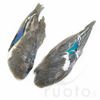 Teal Duck Wings -  - 40450200011 - 1