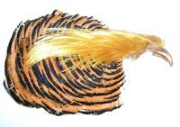 Golden Pheasant Complete Head 1st Quality -  - 404001000024 - 2