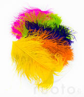 Ostrich Plumes -  - 40450300035 - 1