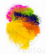 Wapsi Ostrich Plumes -  - 40450300035 - 1