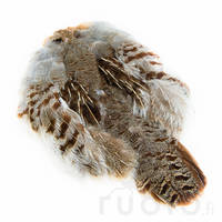 Hungarian Partridge Skin -  - 053526036046 - 1